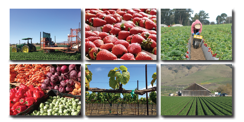 Click to view article, New study: San Luis Obispo agriculture contributes $2.54 billion to our local economy