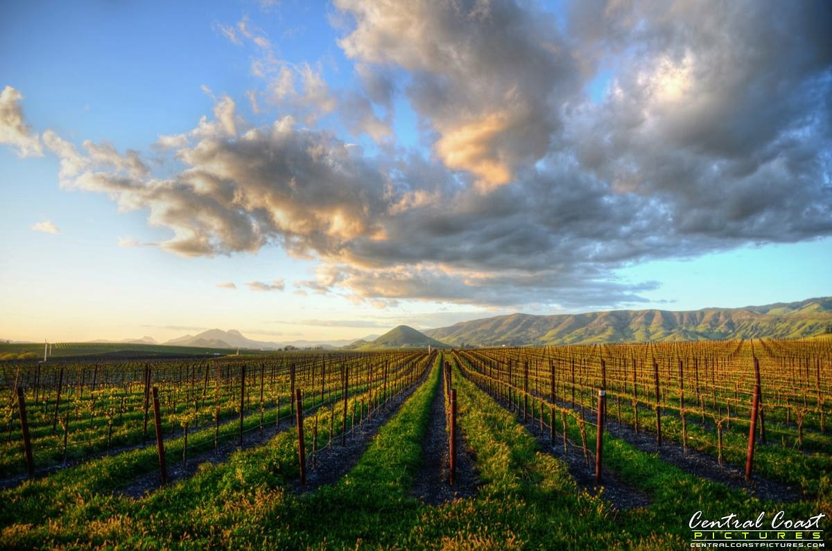 Clouds over Edna Valley Vineyard. Photo by Amy Joseph.