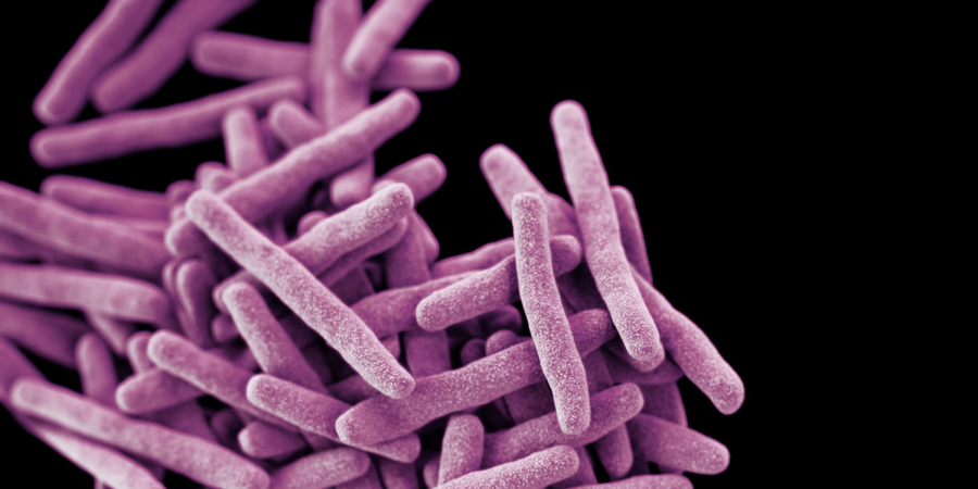 Mycobacterium tuberculosis. Image courtesy of Centers for Disease Control and Prevention.